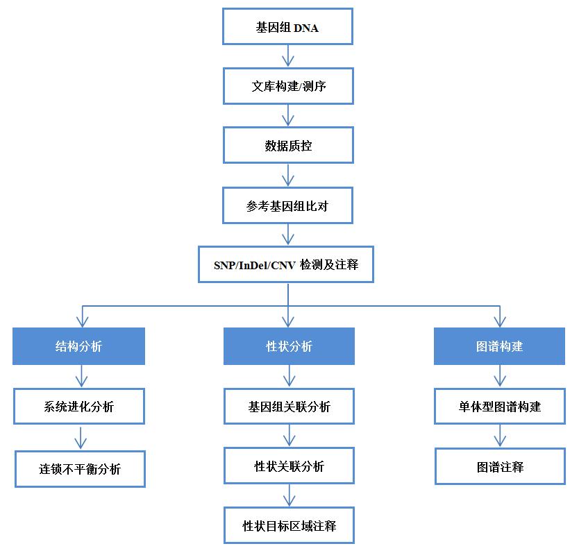 基因组测序 全基因组关联分析 数据分析  数据分析 遗传图谱分析 基因